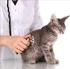 Ветеринарные клиники в Цимлянске